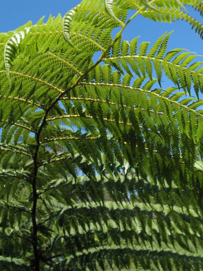 Ferntree Neuseeland